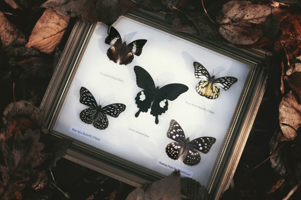 Collecting butterflies: outdated or still relevant?
