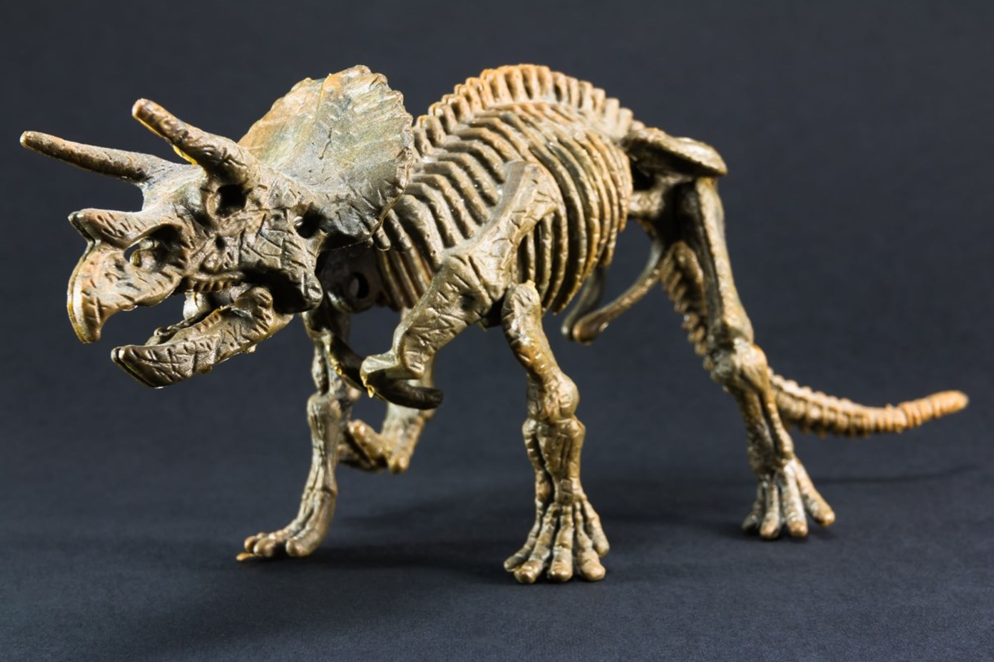 An anonym bought the skeleton of a Triceratops for € 6.65 million